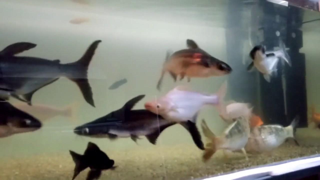 Big Shark Fish Tank In India Youtube