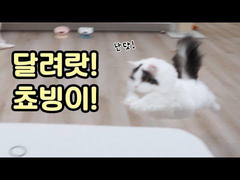 똥꼬발랄 고양이의 우다다다! 달려랏 쵸빙이!