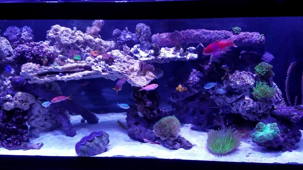 Marineland 125 Gallon Reef Ready Aquarium - 1000+ Aquarium ...