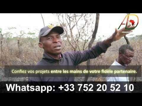 BUZZ : comment valoriser un terrain / plantation : Soa Yaoundé