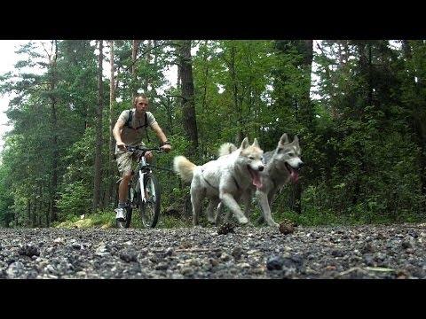 Bikejoring - Having fun with Siberian Husky [HD]