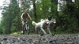 Bikejoring  Having fun with Siberian Husky [HD]