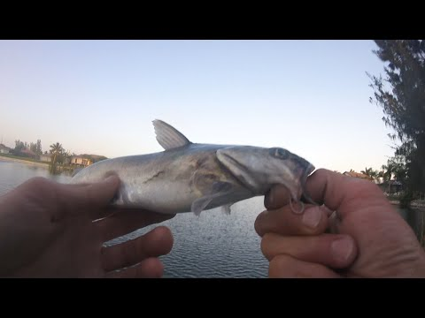 Cape Coral Canal Fishing. FL Series Pt 4.