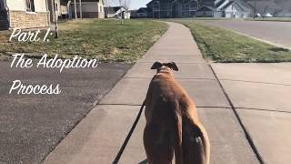 Adopting the Racing Greyhound: Malibu pt1