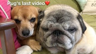 このビデオは 9月19日から9月21日まで最後の3日間の様子と チャウとの...