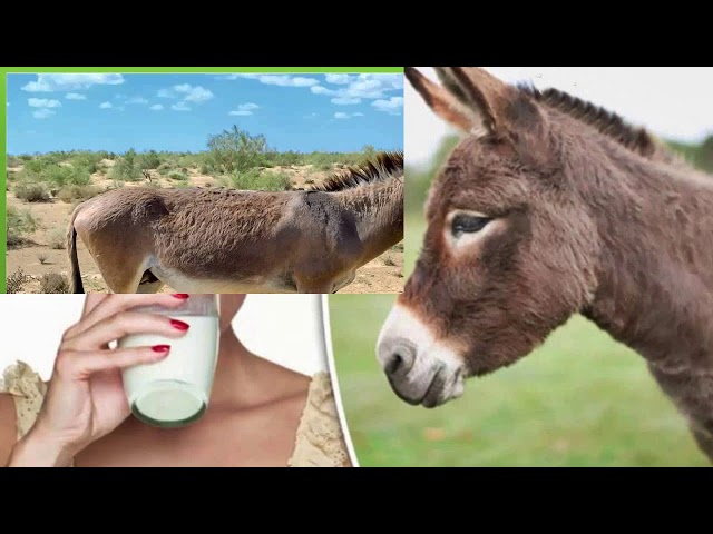 ????? ???? ????? ????? 15 ?????, ??? ???? ???? ????? ????? ??  15 teenager sex with the donkey,