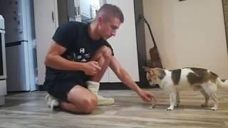 Как научить собаку держать в зубах предметы (подробное описание)
