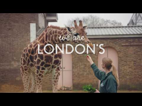 ZSL London Zoo tickets - Video
