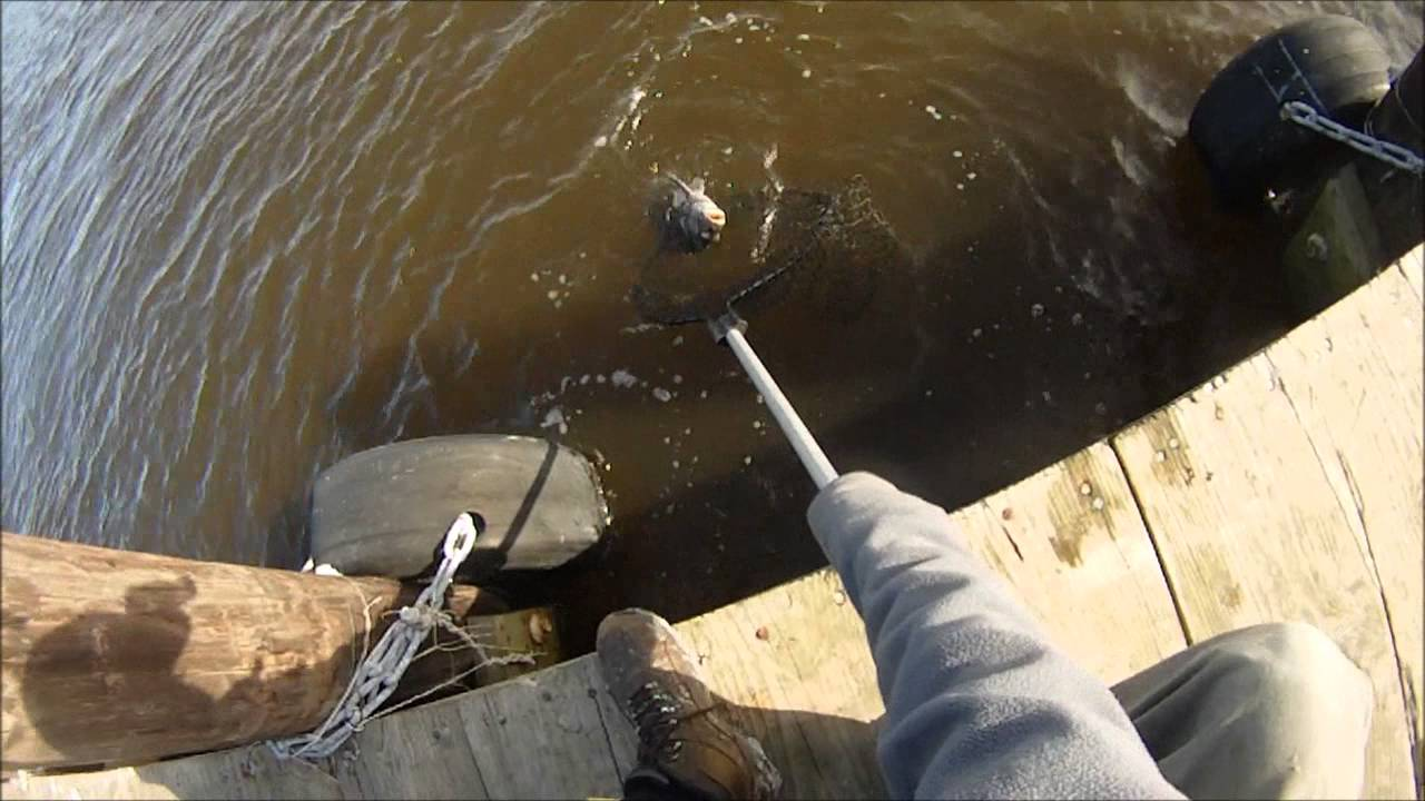 Winter fishing sheepshead and black drum youtube for How to cook drum fish