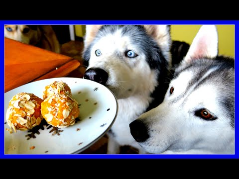NO BAKE PEANUT BUTTER DOG COOKIES  | Snow Dogs Snacks 49 | DIY DOG TREATS