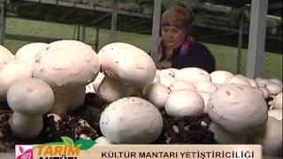 Isparta Ticaret Borsası Tarım Aktüel - Kültür Mantarı Yetiştiriciliği