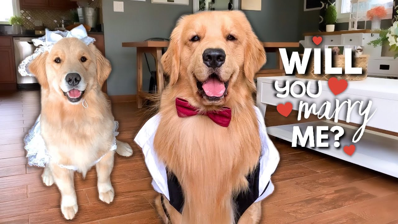 Download My Dog Gets Married?!