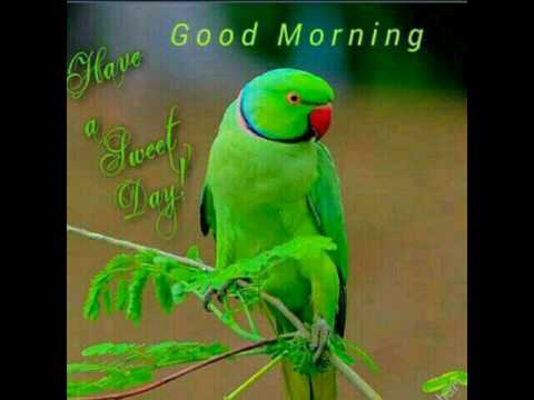 Good Morning My Friends Have A Nice Day Youtube