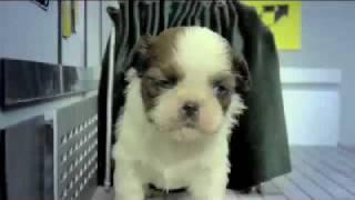 Fuzzy Fuzzy Cute Cute - Parry Gripp