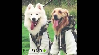 PET FiND 大型犬用ブルゾン 秋冬モデル 紹介.