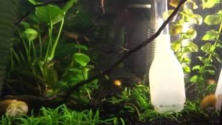 Уход за аквариумом (чистка грунта сифоном, чистка стёкл, корм для рыб)