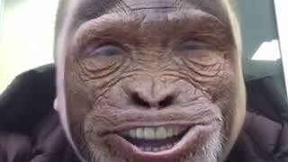 Китайский обезьян