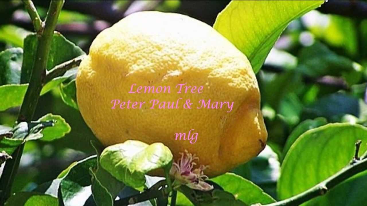 Peter Paul May Lemon Tree Lyrics Youtube