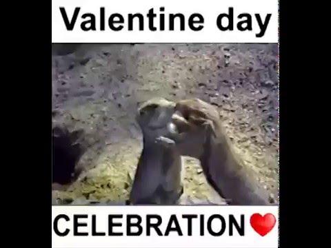 Valentine Day Celebrations of Animals........Funny video ...