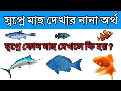 স্বপ্নে কোন মাছ দেখলে কি ফলাফল পাওয়া যায় ? Meaning Of Fish Dream By Hindu Shastra