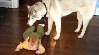 Смешные ролики про животных ;-)