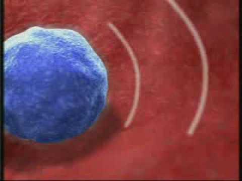 Смотреть в микроскоп сперматозоиды онлайн