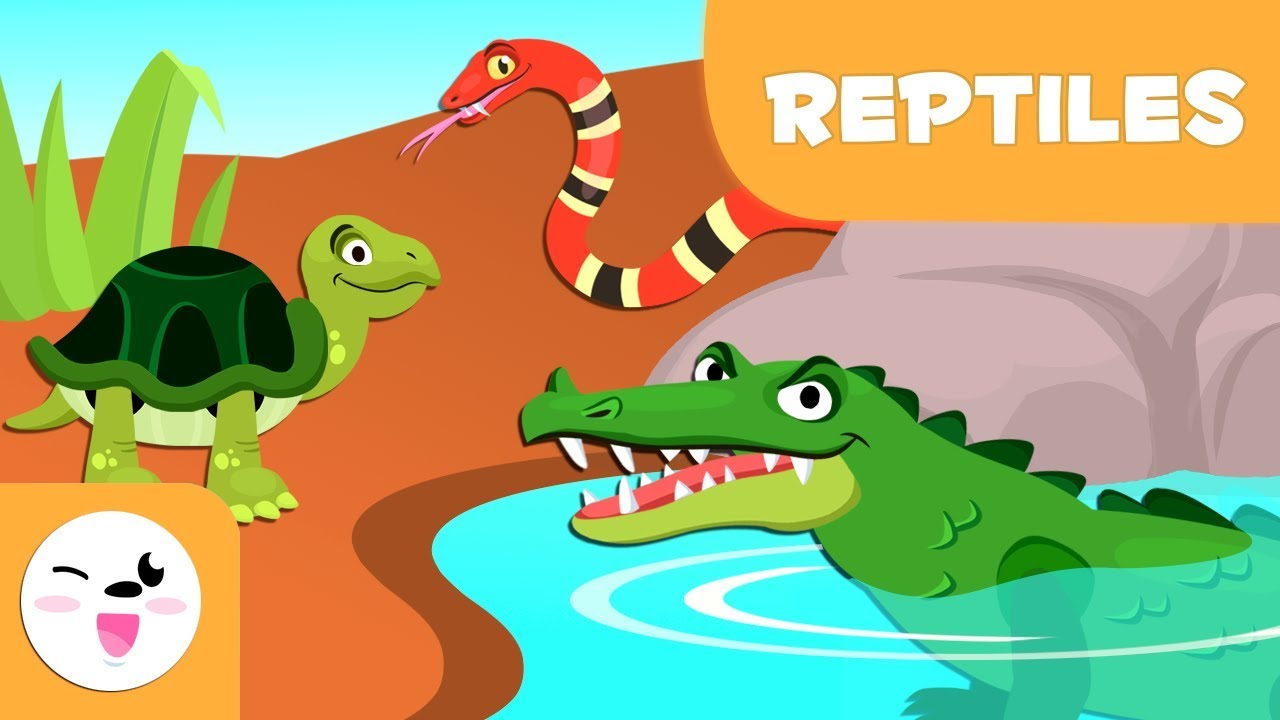 Los reptiles para niños Animales vertebrados Ciencias