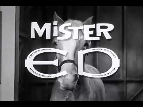 hello, I'm Mr Ed