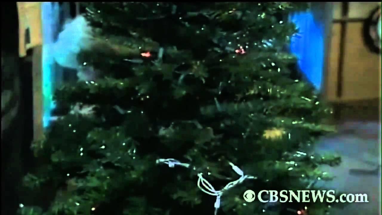 Electric Eel Lights Up Christmas Tree - YouTube