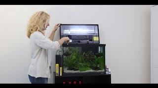 Ersteinrichtung eines Aquariums