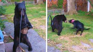 Dog Confronts Bear Destroying Birdfeeder