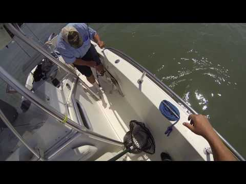 April 28th And 29th 2017 Wachapreague, Virginia Flounder Fishing