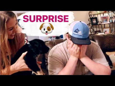 SURPRISING MY BROTHER WITH A NEW PUPPY! His Dream Dog || First Reaction to New Pet || Harley Loper