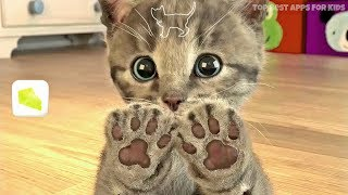 Little Kitten 🐱 My Favorite Cat Game App for Kids | iPad & iPhone