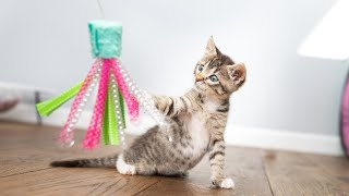 Webinar 2: Beyond the Bottle  Caring for Growing Kittens