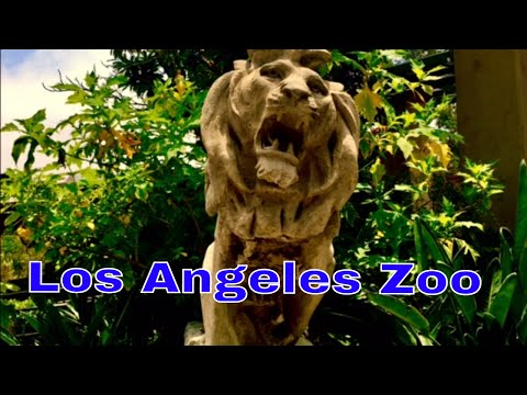 a day at the Los Angeles zoo in tourist vacation attraction Hollywood