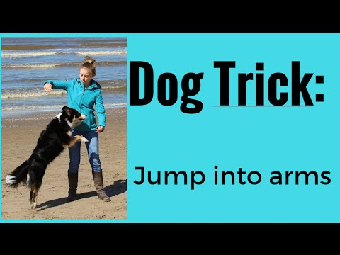 How to: Teach Your Dog to Jump Into Your Arms