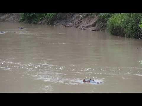 P2243070   Nijlpaarden Riverside Camp