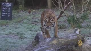 هذا الصباح- حديقة حيوان لندن تبدأ عملية الجرد السنوي