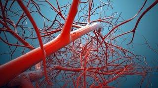 عسل أبيض : طرق جديدة لعلاج الأوعية الدموية