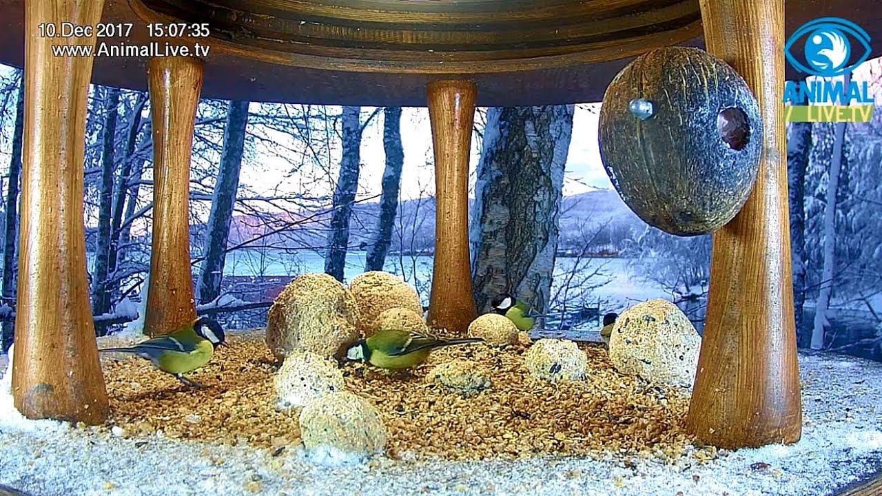 🌬️❄️ Sikorki 🐦i inni w karmniku nad Soliną w Bieszczadach