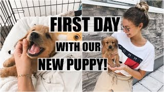 First Day With Our New Puppy!