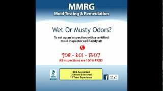 Mold Remediation Sea Bright NJ | Fully Licensed & Insured | Mold Testing Sea Bright New Jersey!