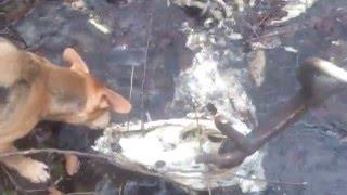Poroże jelenia wieniec z czaszką zrzuty 2016