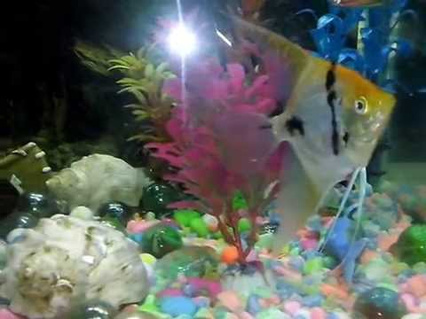 Tipos de peces de agua fria youtube for Tipos de peces de agua fria