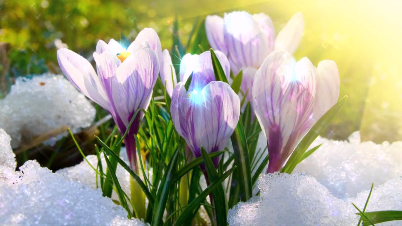 Новым, весна открытки видео