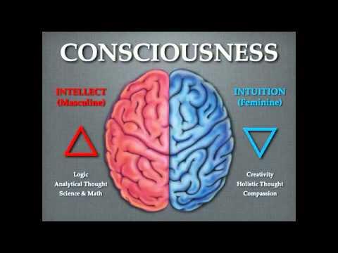 Break down of the Right and Left Brain Hemispheres Mark Passio