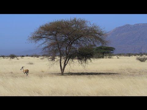 Birding Ethiopia (3/6): Awash National Park & Lake Basaka
