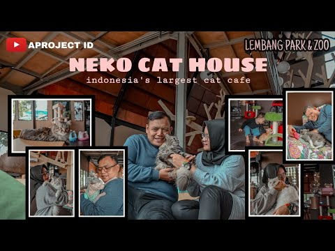 indonesia's-largest-cat-cafe---lembang-park-&-zoo