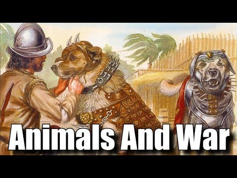 Animals And War - Classical, Medieval, Modern Times